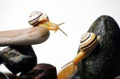 Escargots sur des roches Images libres de droits