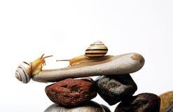 Escargots sur des roches Photo stock