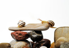 Escargots sur des roches Photographie stock libre de droits