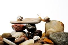 Escargots sur des roches Image stock