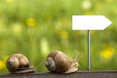 Escargots sur la route images libres de droits