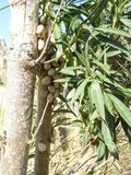 Escargots sur un arbre images stock