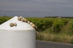 Escargots sur une borne blanche en IL de re avec des vignobles dans un ciel foncé Image stock