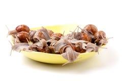 Escargots vivants dans un plat sur le fond blanc Image stock