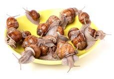 Escargots vivants dans un plat sur le fond blanc Photo stock