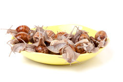 Escargots vivants dans un plat sur le fond blanc Photos libres de droits