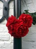 Escarlate de incandescência do grupo da rosa contra a parede velha preto e branco da casa de campo fotografia de stock