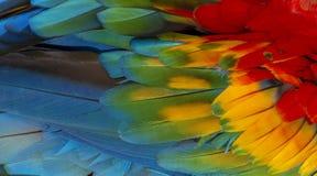 Escarlate do pássaro da arara bonito Fotografia de Stock