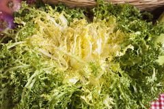 Escarole Royalty Free Stock Photos