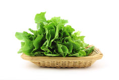 Escarole in Basket Stock Image