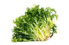 Escarole endive Stock Images