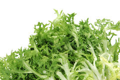 Escarole endive Stock Photography