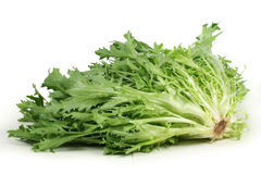 Escarole endive Royalty Free Stock Images