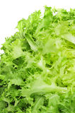 Escarole endive Royalty Free Stock Photos