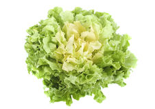 Escarole endive Stock Photos