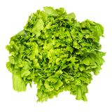 Escarole endive lettuce head from above over white Royalty Free Stock Photos