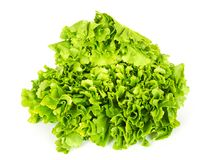 Escarole endive lettuce head front view over white Royalty Free Stock Image
