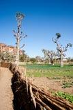 escarpment Мали bandiagara Африки Стоковые Фотографии RF