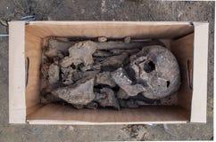 Escavação arqueológico com esqueletos Foto de Stock