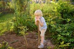 Escavação cansado do menino bonito que trabalha com pá e descansada no quintal no dia ensolarado do verão Ajudante pequeno do ` s imagem de stock