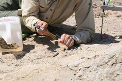 Escavação do dinossauro imagens de stock