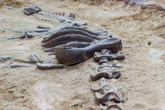 Escavação do simulador do fóssil de dinossauro na areia fotografia de stock royalty free