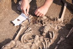 Escavações Archaeological O arqueólogo em um processo do escavador, pesquisando o túmulo, ossos humanos, peça do esqueleto no gro imagem de stock