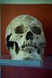 Escavações arqueológicos de um esqueleto humano antigo e de um crânio humano imagens de stock royalty free