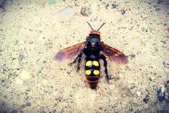 escavador-vespa Imagens de Stock