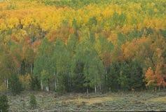 Escena 272-3-1 del otoño Fotos de archivo