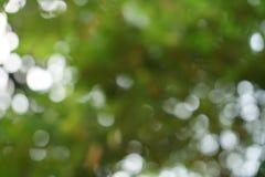 Escena abstracta hermosa de las hojas del amarillo y del fondo verdes claros naturales defocused del bokeh de la luz blanca Foto de archivo libre de regalías