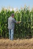 Escena agrícola, granjero que examina el campo de maíz verde Imagenes de archivo