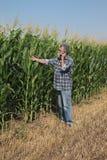 Escena agrícola, granjero que examina el campo de maíz verde Fotos de archivo libres de regalías