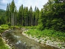 Escena agradable con el río Prut de la montaña en bosque cárpato verde fotografía de archivo libre de regalías