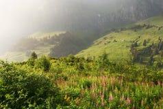 Escena alpestre de la lluvia, Suiza imagen de archivo