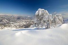 Escena alpina del invierno Fotografía de archivo