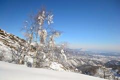 Escena alpina del invierno Fotos de archivo
