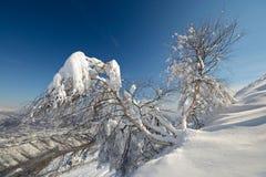 Escena alpina del invierno Fotos de archivo libres de regalías