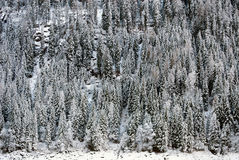 Escena alpina, Italia septentrional Fotos de archivo