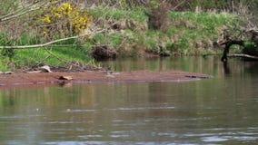 Escena apacible y relajante serena del río encendido un día soleado en abril escocia metrajes