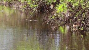 Escena apacible y relajante serena del río encendido un día soleado en abril escocia almacen de metraje de vídeo