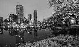 Escena blanco y negro de la noche de los barcos del lago y del cisne en el parque de Ueno en Tokio, Japón foto de archivo libre de regalías