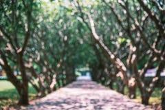 Escena borrosa de la calzada debajo del árbol Imágenes de archivo libres de regalías
