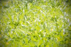 Escena borrosa de la hierba en luz del día Imagen de archivo