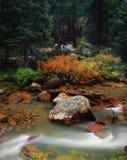 Escena clásica de la montaña del verano después de la lluvia, Colorado Fotografía de archivo libre de regalías