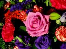 Escena color de rosa del jardín Imagen de archivo libre de regalías