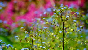 Escena colorida del jardín en primavera Imágenes de archivo libres de regalías
