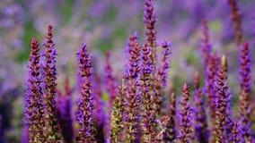 Escena colorida del jardín en primavera Fotos de archivo