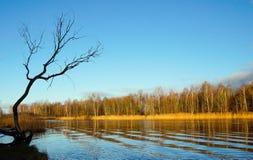 Escena con el árbol en fondo de la isla Imagen de archivo
