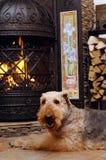 Escena con el perro Foto de archivo libre de regalías